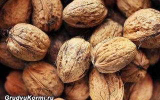 Увеличение лактации и жирности молока с помощью грецких орехов при грудном вскармливании