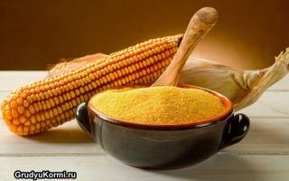 Питание кукурузной кашей при грудном вскармливании