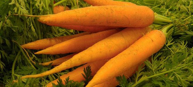 Как вводят морковь в прикорм грудничку