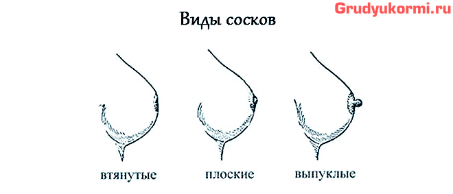 Виды сосков