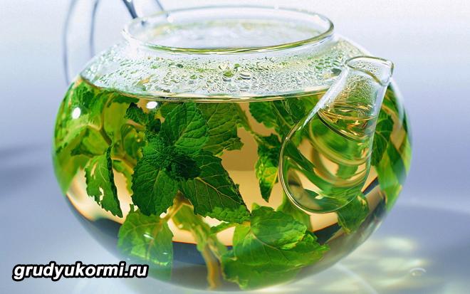Травяной отвар из мяты в чайничке