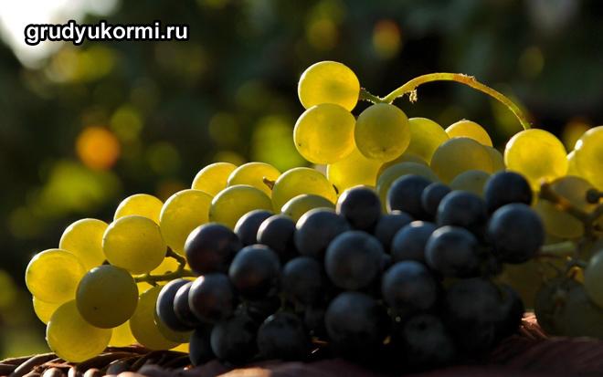 Светлый и темный виноград