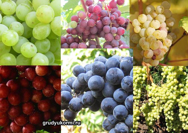 Разные сорта винограда