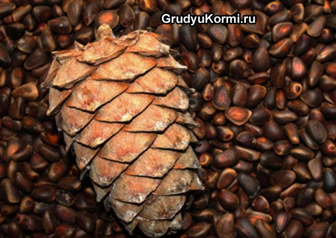 Кедровая шишка, кедровые орешки